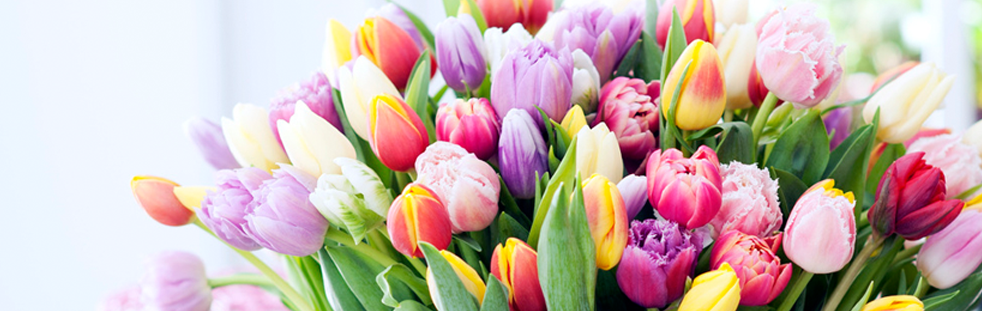 Voorjaarsbloemen HJ de Mooij