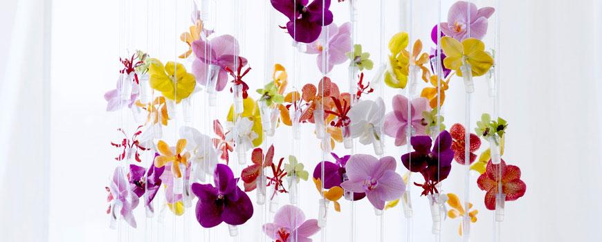 _Orchidee