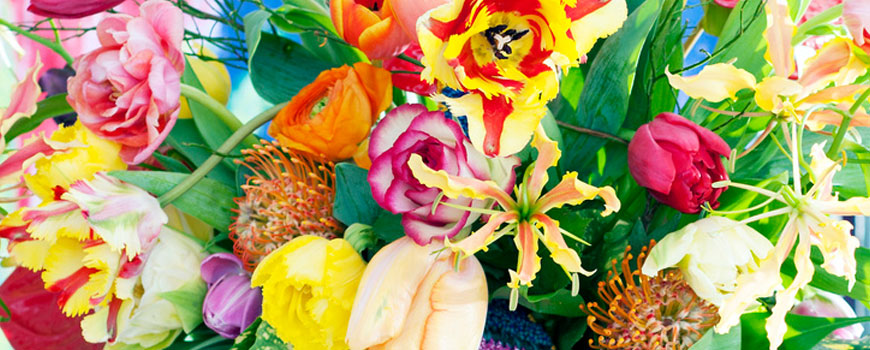 160125_Voorjaarsbloemen