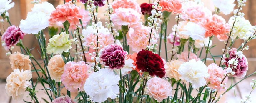 Bloemen H.J. de Mooij