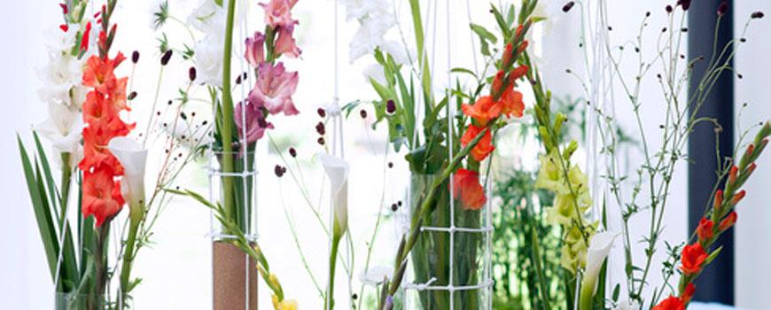 Gladiolen H.J. de Mooij
