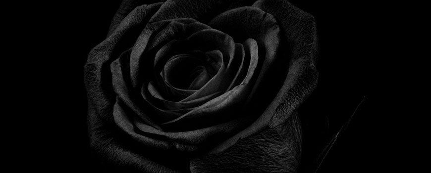Black Friday H.J. de Mooij