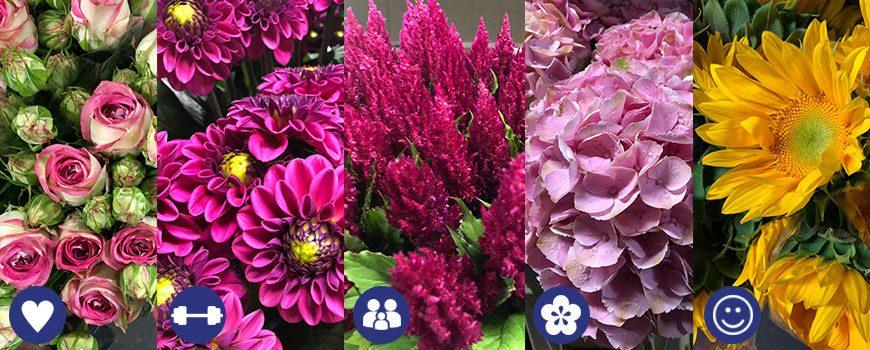 180423_Moederdag_Assortiment_bloemen_HJdeMooij
