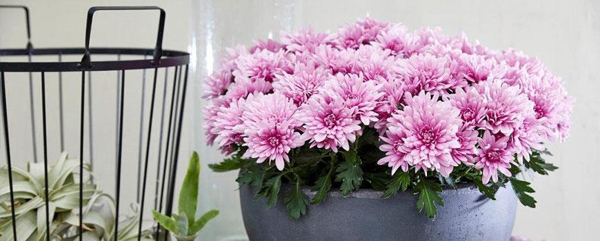Lievelingsbloemen HJ de Mooij